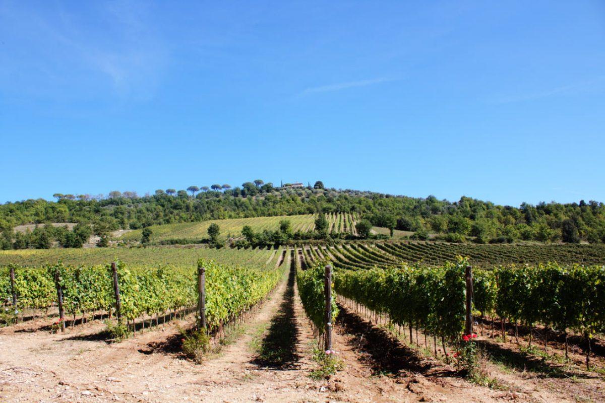 Trebbiano Spoletino vineyard – Vineria del Carmine