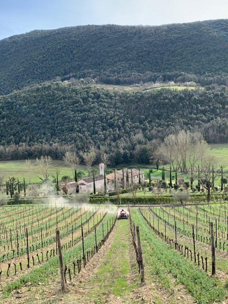 Mowing the vinyard